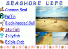 Seashore life | Recurso educativo 42351
