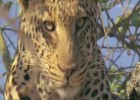 Animals in Africa | Recurso educativo 47522