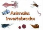 Animales invertebrados | Recurso educativo 8683
