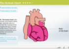 The human heart | Recurso educativo 64146