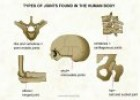 Types of joints | Recurso educativo 73221
