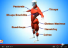 Video: The muscular system | Recurso educativo 77198