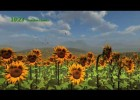 Girasoles | Recurso educativo 724984