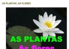As plantas: as flores | Recurso educativo 741070