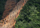 What is Deforestation? | Recurso educativo 751588