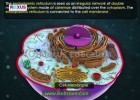 Cell Organelles - Part 1 | Recurso educativo 760582