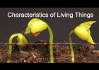 Characteristics of Living Things | Recurso educativo 777735